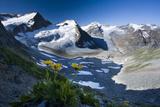 Austria, Tyrol, …tztaler Alpen, Wildspitze, Summit, Pippau, Crepis Photographic Print by Rainer Mirau