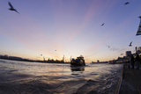 Gulls in the Backlight, Harbour Cranes, St Pauli Landing Stages Photographic Print by Axel Schmies