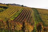 Germany, Hesse, Odenwald (Region), Bergstrasse (Region), Heppenheim (Town), Vineyards, Autumn Mood Photographic Print by Udo Siebig