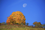 Moon About a Radiant Yellow Tinted Maple Tree Photographic Print by Uwe Steffens