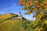 Ruin FŸrstenberg Castle Above the Town Rheindiebach Above Autumn-Coloured Vineyards Photographic Print by Uwe Steffens