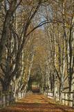 Luxembourg, Ansembourg Castle, Path, Avenue, Autumn Foliage Photographic Print by Chris Seba