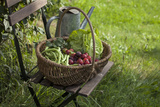 Wicker Basket with Plums, Salad, Beans Photographic Print by Andrea Haase