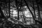The Netherlands, Frisia, Terschelling, Dunes, Pine, Pinewood Reproduction photographique par Ingo Boelter