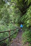 Woman Hiking in the Forest of Cubo De La Galga, Biosphere Reserve Los Tilos, Canary Islands Reproduction photographique par Gerhard Wild