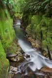 Whaiti-Nui-A-Toi Canyon, Whirinaki Forest Park, Bay of Plenty, North Island, New Zealand Photographic Print by Rainer Mirau