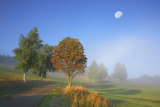 Country Lane Through the Meadows of the Eastern Rhšn Near Breitungen, Fog, Decreasing Moon Photographic Print by Uwe Steffens