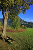 Germany, Bavaria, Cloudless Autumn Day, Schwangau Near FŸssen, Neuschwanstein Castle Photographic Print by Uwe Steffens
