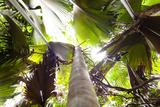 Vallee De Mai, Praslin, Seychelles, Africa, Rain Forest, UNESCO World Heritage Site, Coco De Mer Photographic Print by Harry Marx