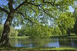 Germany, Lower Saxony, Hannover, Georgengarten, Pond, Tree, Morning Light Photographic Print by Chris Seba