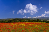 France, Provence, Vaucluse, Roussillon, Poppy Field Against Monts De Vaucluse Photographic Print by Udo Siebig