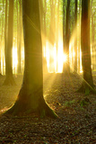 Sunrays in the Near-Natural Beech Forest after Shower, Stubnitz, Island RŸgen Fotografie-Druck von Andreas Vitting