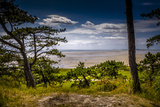 The Netherlands, Frisia, Terschelling, Dunes, Pine, Pinewood Reproduction photographique par Ingo Boelter