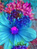Composing with Blue and Pink Blossoms Reproduction photographique par Alaya Gadeh