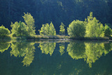 Trees are Reflected a Lake of the Former Diatomite Pits Photographic Print by Uwe Steffens
