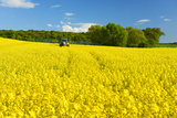 Conventional Agriculture, Farmer Spreading Pesticides on the Rape Field by Tractor Fotografie-Druck von Andreas Vitting