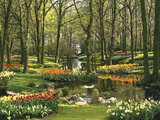 Netherlands, South Holland, Keukenhof, Flower Park, Spring Photographic Print by  Thonig