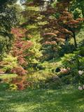 Japanese Garden Fotografisk trykk av  Thonig
