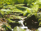 Forest, Brook, Vegetation, Moss, Ferns Photographic Print by  Thonig