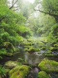 Rain Forest, Omanawa Gorge, Bay of Plenty, North Island, New Zealand Fotografie-Druck von Rainer Mirau