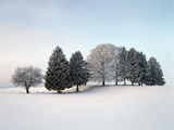 Landscape, Trees, Winter Photographic Print by Herbert Kehrer