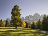 Autumnal Alp in Front of the Mountain Rosengarten, Kšlbleggiesen, South Tyrol Photographic Print by Rainer Mirau