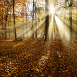 Sunrays and Morning Fog, Deciduous Forest in Autumn, Ziegelroda Forest, Saxony-Anhalt, Germany Fotografie-Druck von Andreas Vitting