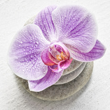 Orchid Blossom on Tower Made of Stones Photographic Print by Uwe Merkel