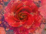 A Floral Montage Stampa fotografica di Alaya Gadeh
