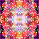 Mandala Ornament from Red Blooming Orchids, Conceptual Photographic Layer Work Reproduction photographique par Alaya Gadeh