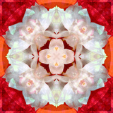 Symmetrical Photomontage of a White Orchid on Red Floral Ornament with Circle Reproduction photographique par Alaya Gadeh