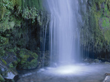 New Zealand, North Island, Mt.Taranaki National Park, Dawson Falls, Waterfall Photographic Print by  Thonig
