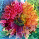 Photographic Layer Work of a Big Blossom in Multicolor Stampa fotografica di Alaya Gadeh