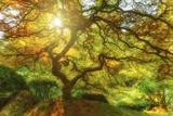 Soleil de beau matin Reproduction photographique par  Darren White Photography