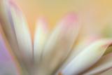 Soft Touch Fotografie-Druck von Heidi Westum