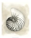 Shell Schematic II Reproduction giclée Premium par Megan Meagher