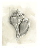 Shell Schematic I Premium Giclee Print by Megan Meagher