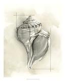 Shell Schematic I Impressão giclée premium por Megan Meagher