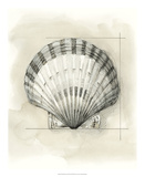 Shell Schematic III Premium Giclee Print by Megan Meagher