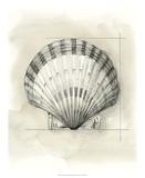 Shell Schematic III Impressão giclée premium por Megan Meagher