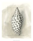 Shell Schematic IV Premium Giclee Print by Megan Meagher