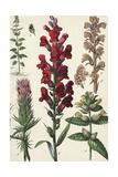 Segments of Tall, Flowering Stalks Kunstdrucke