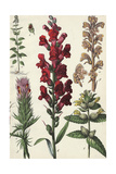 Segments of Tall, Flowering Stalks Print