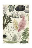 Sea Plants Kunst