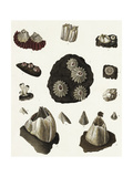 Scientific Illustrations of Coral and Sea Urchins Lámina