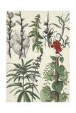 Multiple Stems of Various Leafy Plants Kunstdruck