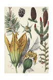Botanical Pine Cones, Evergreen Branches, and Flowers Affiches