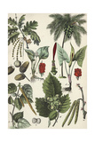 Variety of Seeds, Nuts, and Leaves Poster