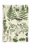 Variety of Ferns and Branching Plants Poster