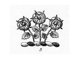 Three Stylized Flowers on Stems Symbol Prints